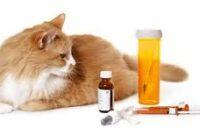 Merk-Vitamin-Kucing